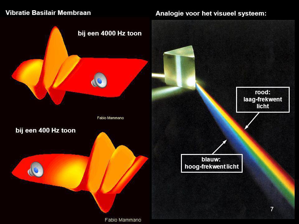 Analogie voor het visueel systeem: Vibratie Basilair Membraan blauw: hoog-frekwent licht rood: laag-frekwent licht bij een 400 Hz toon bij een 4000 Hz