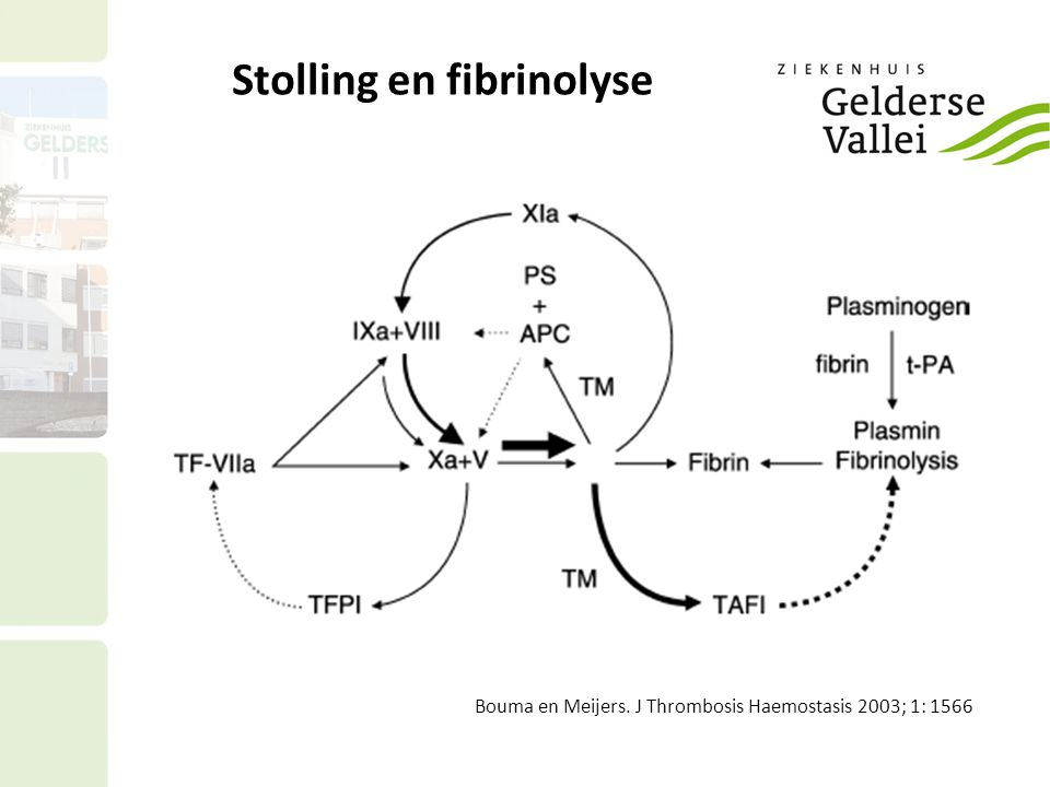 Maat voor fibrinolyse: D-dimeer D-dimeren: gevormd fibrinogeen wordt omgezet in fibrinemonomeren.