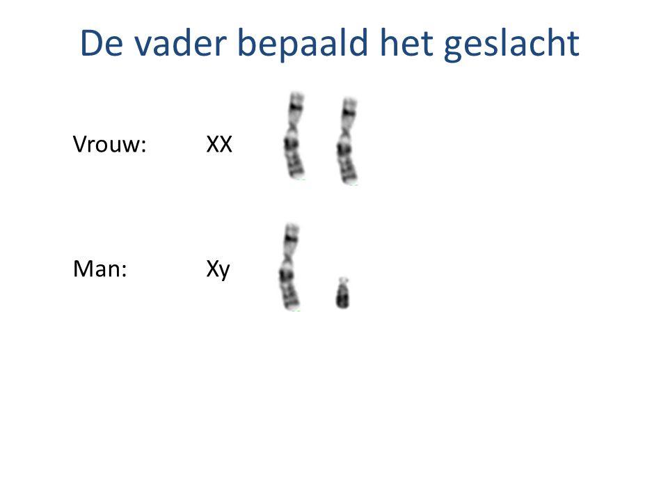 X-chromosomaal X-chromosomale eigenschappen bevinden zich ALLEEN op X-chromosoom en NIET op y- chromosoom Dominante eigenschap:X A Recessieve eigenschap:X a Vrouw: X A X A, X a X a of X A X a Man: X A y of X a y