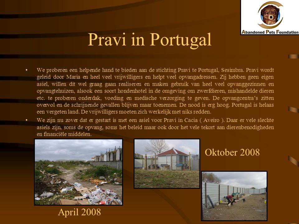 Pravi in Portugal We proberen een helpende hand te bieden aan de stichting Pravi te Portugal, Sesimbra. Pravi wordt geleid door Maria en heel veel vri