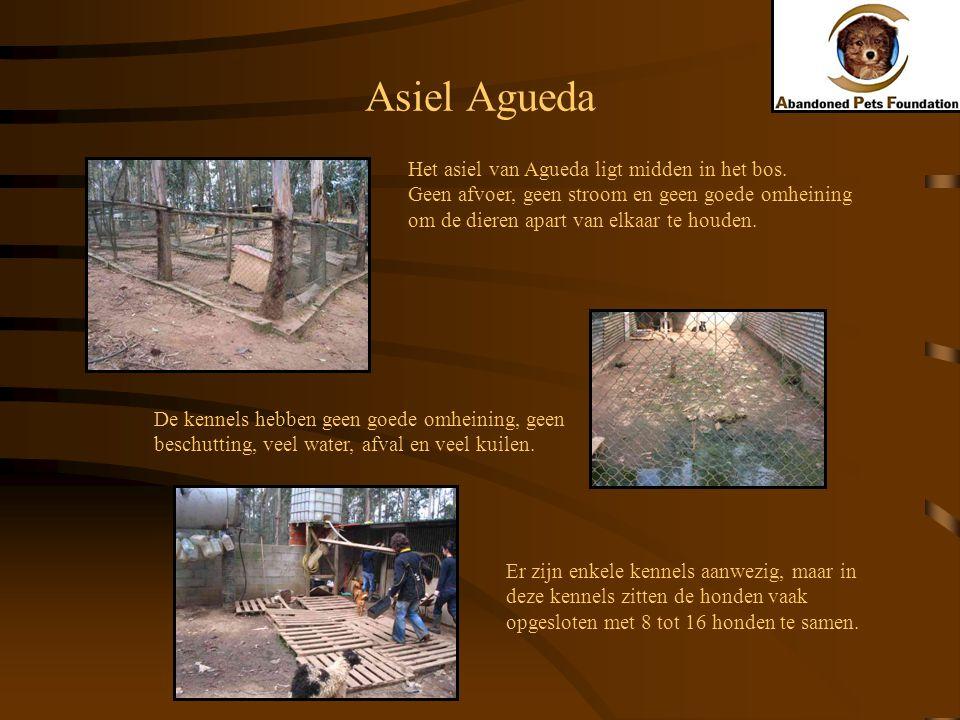 Asiel Agueda Het asiel van Agueda ligt midden in het bos. Geen afvoer, geen stroom en geen goede omheining om de dieren apart van elkaar te houden. De