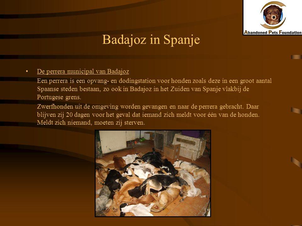 Badajoz in Spanje De perrera municipal van Badajoz Een perrera is een opvang- en dodingstation voor honden zoals deze in een groot aantal Spaanse sted
