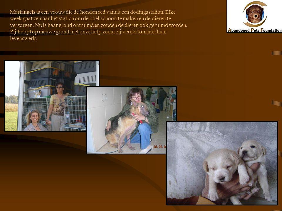 Mariangels is een vrouw die de honden red vanuit een dodingsstation. Elke week gaat ze naar het station om de boel schoon te maken en de dieren te ver