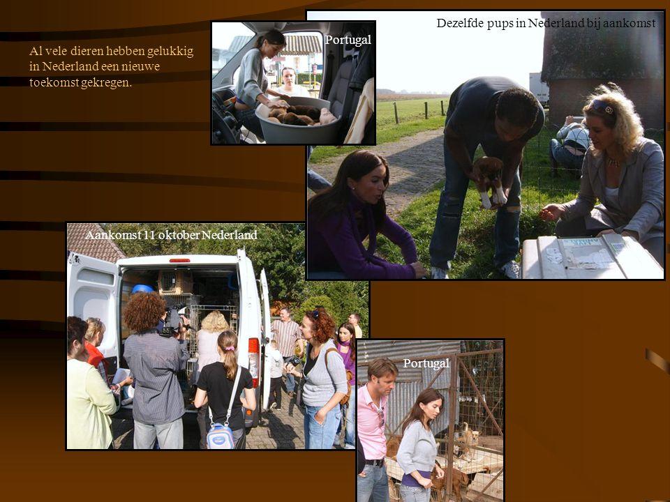 Al vele dieren hebben gelukkig in Nederland een nieuwe toekomst gekregen. Portugal Aankomst 11 oktober Nederland Dezelfde pups in Nederland bij aankom