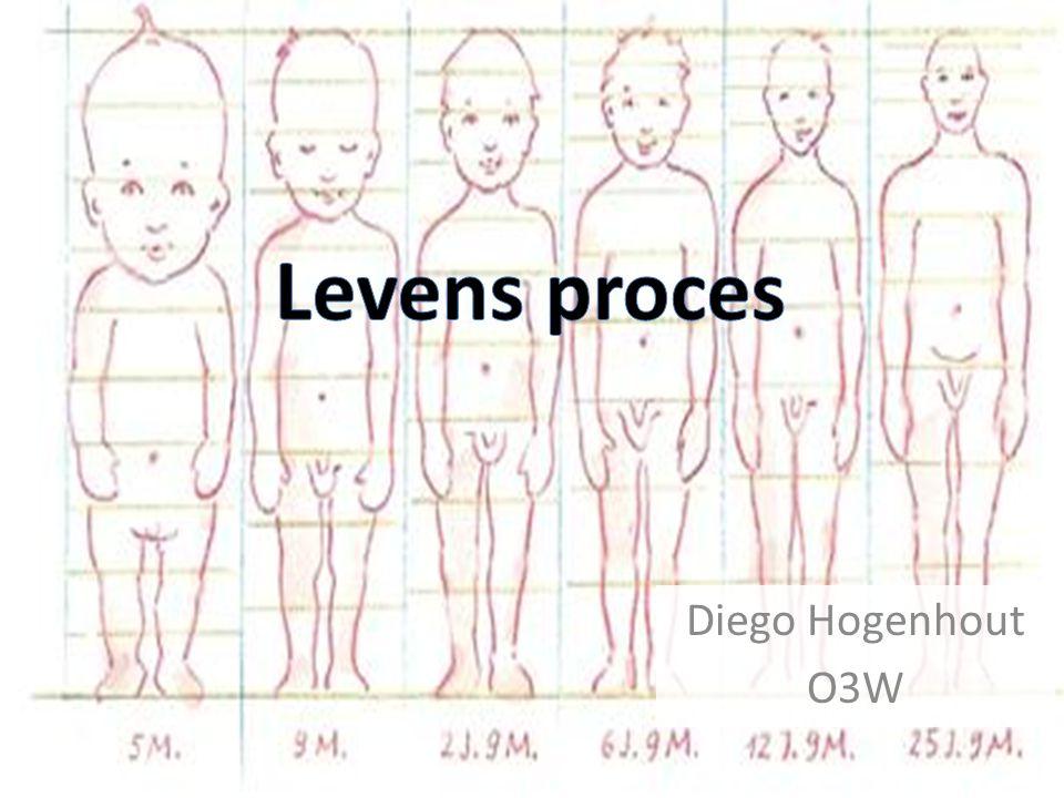 Diego Hogenhout O3W