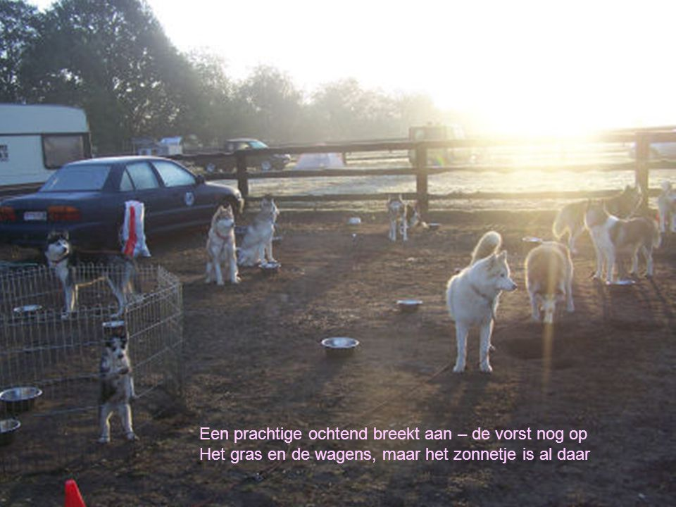 Een prachtige ochtend breekt aan – de vorst nog op Het gras en de wagens, maar het zonnetje is al daar