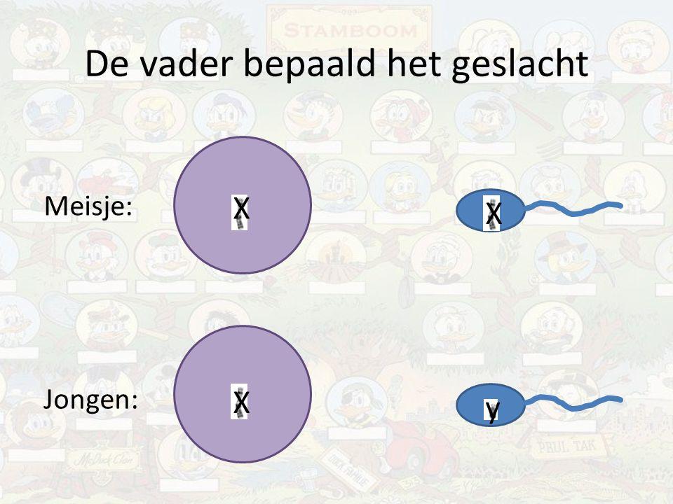 X-chromosomaal Sommige eigenschappen bevinden zich ALLEEN op X-chromosoom en NIET op y-chromosoom Dominante eigenschap:X A Recessieve eigenschap:X a Vrouw: X A X A, X a X a of X A X a Man: X A y of X a y