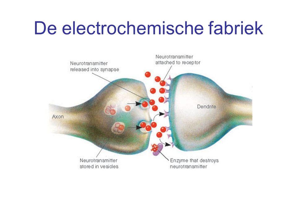 Neuroplasticiteit Nieuwe activiteiten maken nieuwe neurale verbindingen Nieuwe cellen: neurogenese Nieuwe verbindingen Nieuwe netwerken Verbinding tussen netwerken Onze hersenen veranderen voortdurend door wat we doen