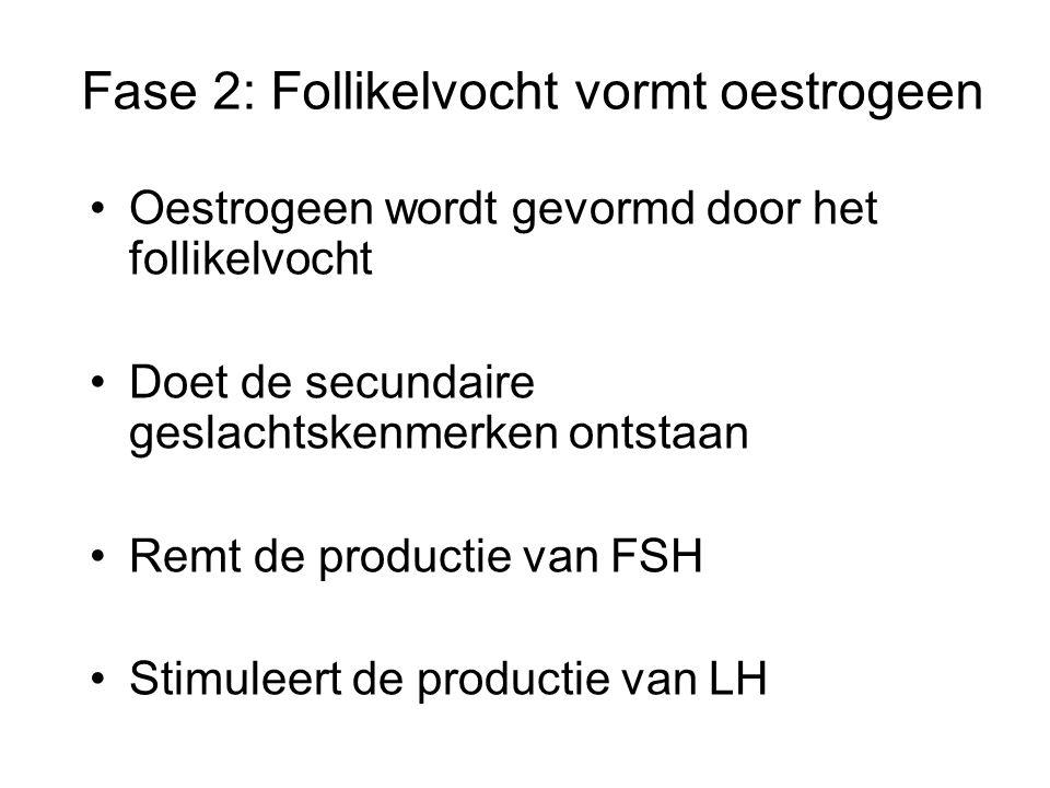 Fase 2: Follikelvocht vormt oestrogeen Oestrogeen wordt gevormd door het follikelvocht Doet de secundaire geslachtskenmerken ontstaan Remt de productie van FSH Stimuleert de productie van LH