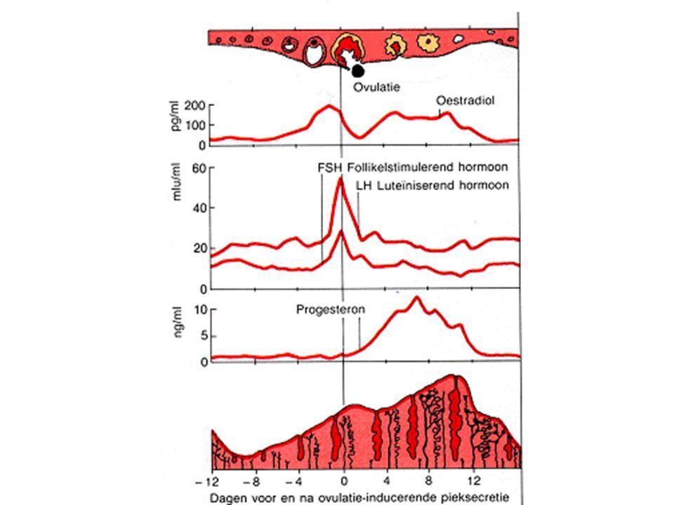 PERIODE VRUCHTBAARHEID VAN DE VROUW Duur van de menstruatiecyclus één jaar controleren: N max = 30 dagen N min = 27 dagen Onvruchtbare periode: N min – 19 27-19 = 8 dagen vanaf eerste dag menstruatie Vruchtbare periode: N max – N min + 8 30 – 27 + 8 = 11 dagen vanaf de laatste dag van de onvruchtbare periode 2 de onvruchtbare periode: aantal dagen in 1en 2 optellen 8 + 11 = 19 de dag na eerste dag van de menstruatie