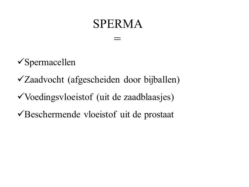 SPERMA = Spermacellen Zaadvocht (afgescheiden door bijballen) Voedingsvloeistof (uit de zaadblaasjes) Beschermende vloeistof uit de prostaat