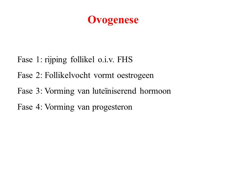 Ovogenese Fase 1: rijping follikel o.i.v. FHS Fase 2: Follikelvocht vormt oestrogeen Fase 3: Vorming van luteïniserend hormoon Fase 4: Vorming van pro