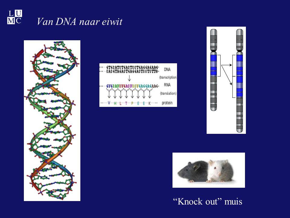 """Van DNA naar eiwit """"Knock out"""" muis"""