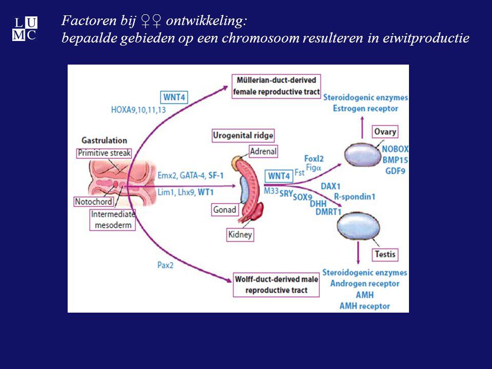 Factoren bij ♀♀ ontwikkeling: bepaalde gebieden op een chromosoom resulteren in eiwitproductie