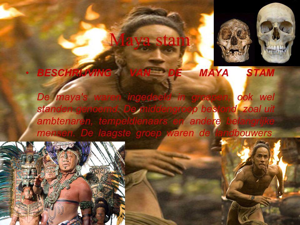 Maya stam BESCHRIJVING VAN DE MAYA STAM De maya's waren ingedeeld in groepen, ook wel standen genoemd. De middengroep bestond zoal uit ambtenaren, tem