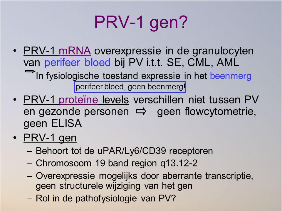 PRV-1 gen? PRV-1 mRNA overexpressie in de granulocyten van perifeer bloed bij PV i.t.t. SE, CML, AML In fysiologische toestand expressie in het beenme