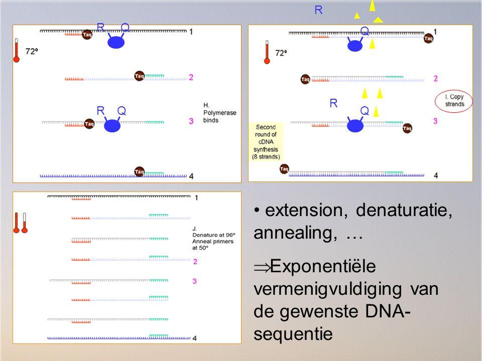R R Q QQ Q R R extension, denaturatie, annealing, …  Exponentiële vermenigvuldiging van de gewenste DNA- sequentie