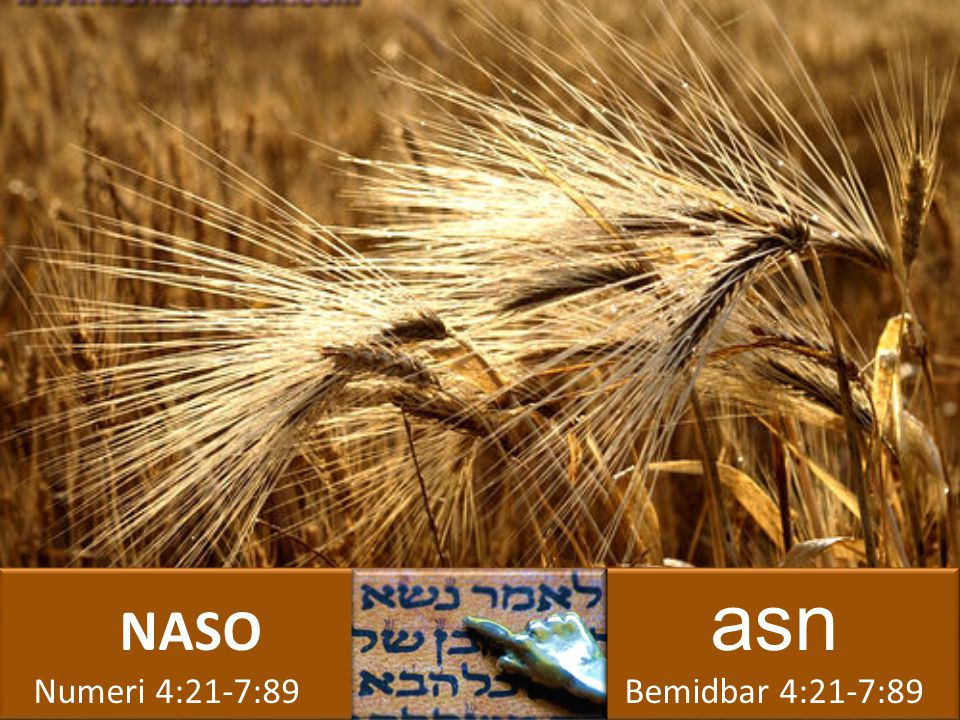 NASO asn Numeri 4:21-7:89 Bemidbar 4:21-7:89 NASO asn Numeri 4:21-7:89 Bemidbar 4:21-7:89
