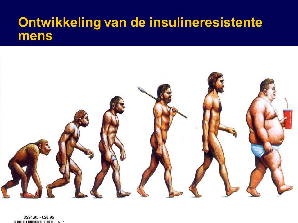 Ontwikkeling van de insulineresistente mens