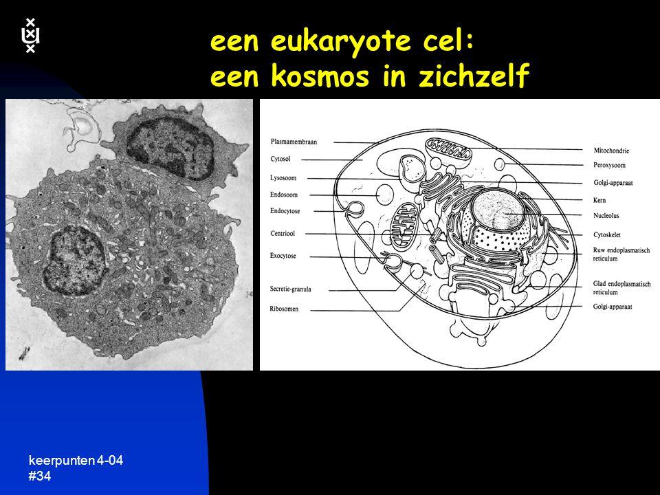 keerpunten 4-04 #33 structuur van eukaryote cellen is veel complexer cytoplasma DNA celmembraan een plantecel