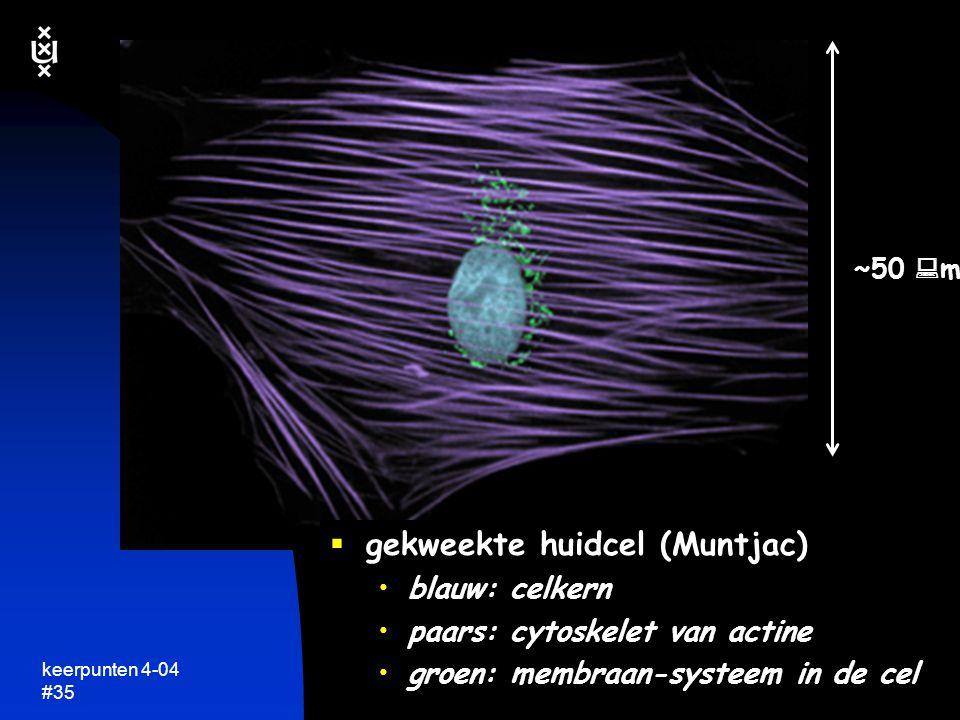 keerpunten 4-04 #34 een eukaryote cel: een kosmos in zichzelf