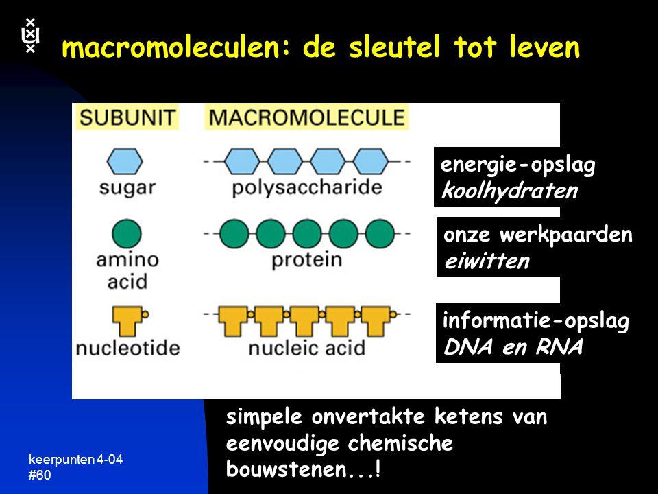 keerpunten 4-04 #59 eiwitstructuur database en viewer  Brookhaven database http://www.rcsb.org/pdb/ duizenden 3D structuren van biomacromoleculen  RASMOL: eenvoudige viewer voor eiwitstructuren http://openrasmol.org/ download structuren in PDB format