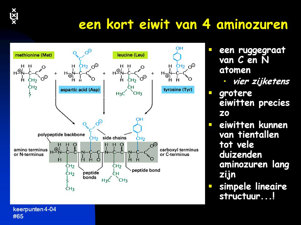 keerpunten 4-04 #64 eiwitten zijn lineaire keten van aminozuren  alle eiwitten in levende organismen opgebouwd uit dezelfde aminozuren  er zijn maar 20 verschillende aminozuren verschillen alleen in zijketen  aminozuren zijn simpele chemische verbindingen