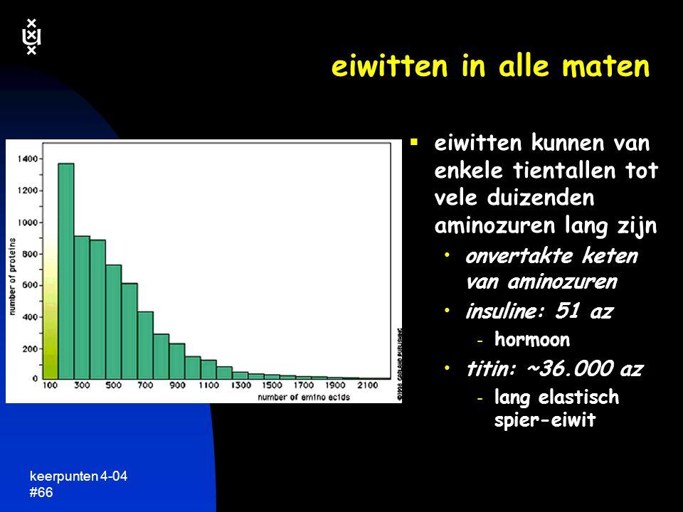 keerpunten 4-04 #65  een ruggegraat van C en N atomen vier zijketens  grotere eiwitten precies zo  eiwitten kunnen van tientallen tot vele duizenden aminozuren lang zijn  simpele lineaire structuur....