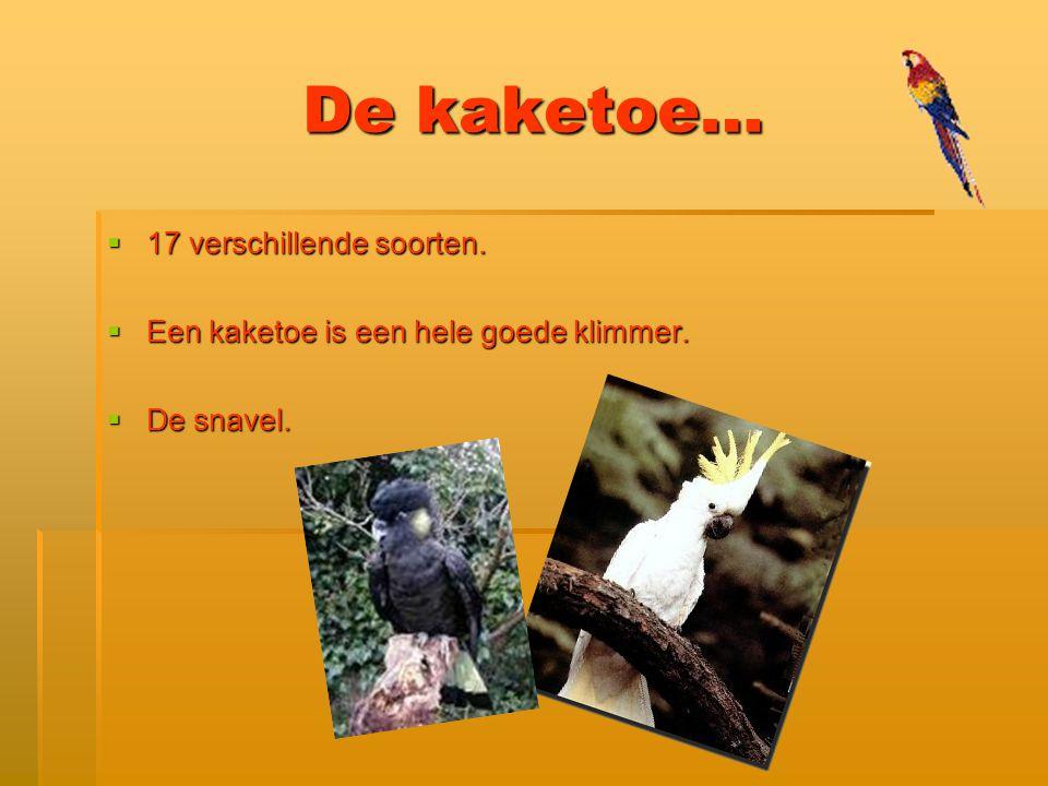 Papegaai als huisdier…  Is het zielig voor de papegaai .