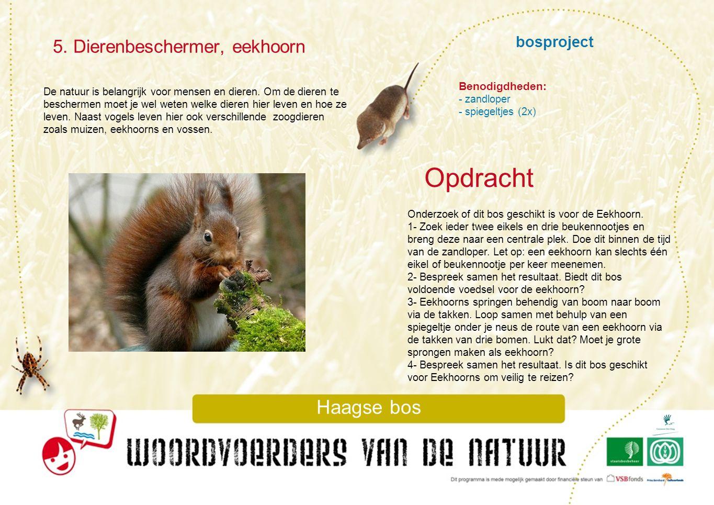 bosproject 5. Dierenbeschermer, eekhoorn Haagse bos De natuur is belangrijk voor mensen en dieren. Om de dieren te beschermen moet je wel weten welke