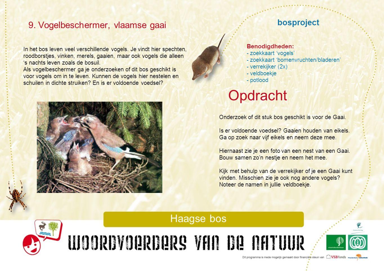 bosproject 9. Vogelbeschermer, vlaamse gaai Haagse bos In het bos leven veel verschillende vogels. Je vindt hier spechten, roodborstjes, vinken, merel