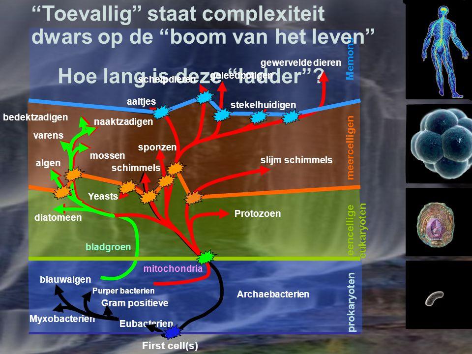 """meercelligen """"Toevallig"""" staat complexiteit Hoe lang is deze """"ladder""""? First cell(s) bladgroen mitochondria Purper bacterien blauwalgen Eubacterien Gr"""