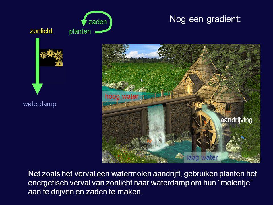 zonlicht waterdamp planten hoog water laag water aandrijving zaden Nog een gradient: Net zoals het verval een watermolen aandrijft, gebruiken planten