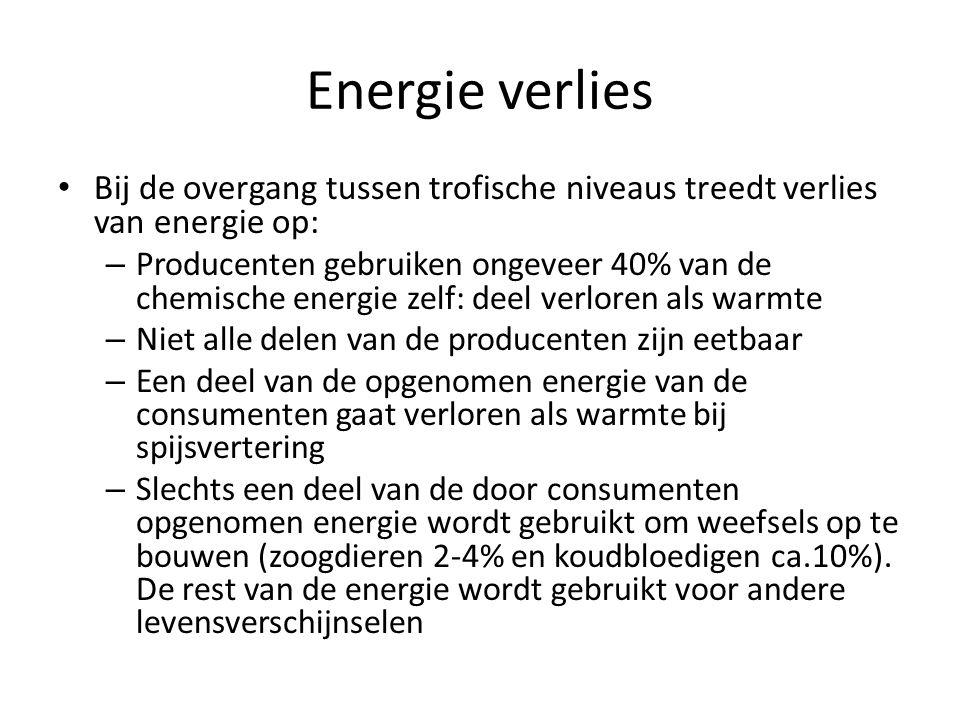 Energie verlies Bij de overgang tussen trofische niveaus treedt verlies van energie op: – Producenten gebruiken ongeveer 40% van de chemische energie