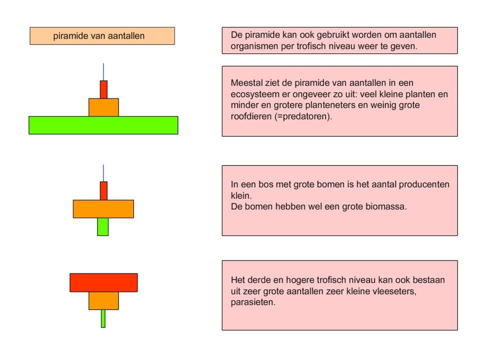Piramide van biomassa