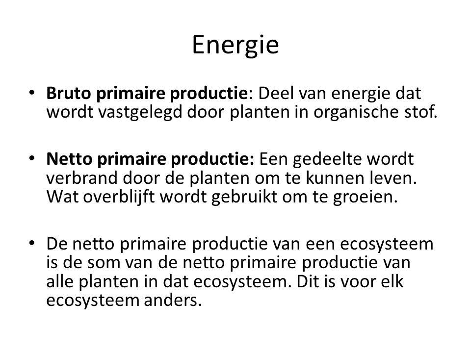 Energie Bruto primaire productie: Deel van energie dat wordt vastgelegd door planten in organische stof. Netto primaire productie: Een gedeelte wordt