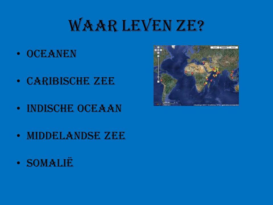 Waar leven ze? Oceanen Caribische zee Indische oceaan Middelandse zee Somalië