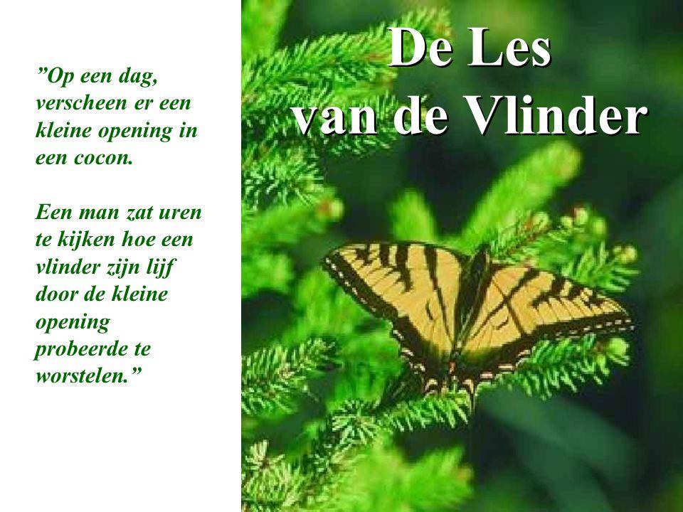 """De Les van de Vlinder """"Op een dag, verscheen er een kleine opening in een cocon. Een man zat uren te kijken hoe een vlinder zijn lijf door de kleine o"""