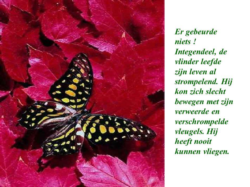 Er gebeurde niets ! Integendeel, de vlinder leefde zijn leven al strompelend. Hij kon zich slecht bewegen met zijn verweerde en verschrompelde vleugel