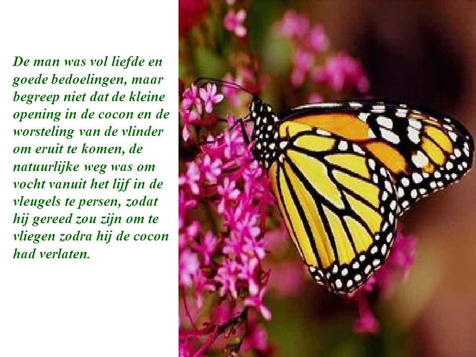 De man was vol liefde en goede bedoelingen, maar begreep niet dat de kleine opening in de cocon en de worsteling van de vlinder om eruit te komen, de