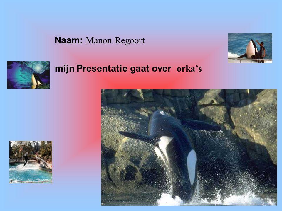 """Naam: Manon Regoort mijn Presentatie gaat over orka's Klik op """"Naam"""". Vul je naam in. Doe hetzelfde met """"hobby"""" Hier kun je een foto / tekening Invoeg"""