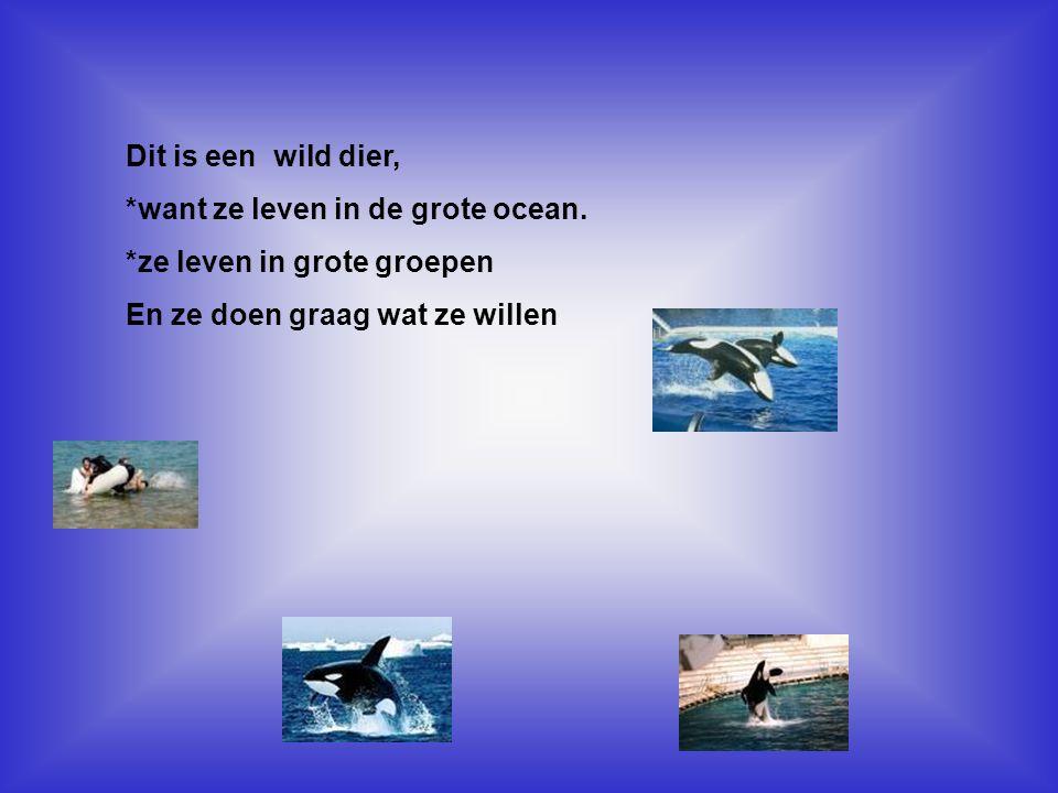Dit is een wild dier, *want ze leven in de grote ocean. *ze leven in grote groepen En ze doen graag wat ze willen Vul hier in, waarom dit dier een hui