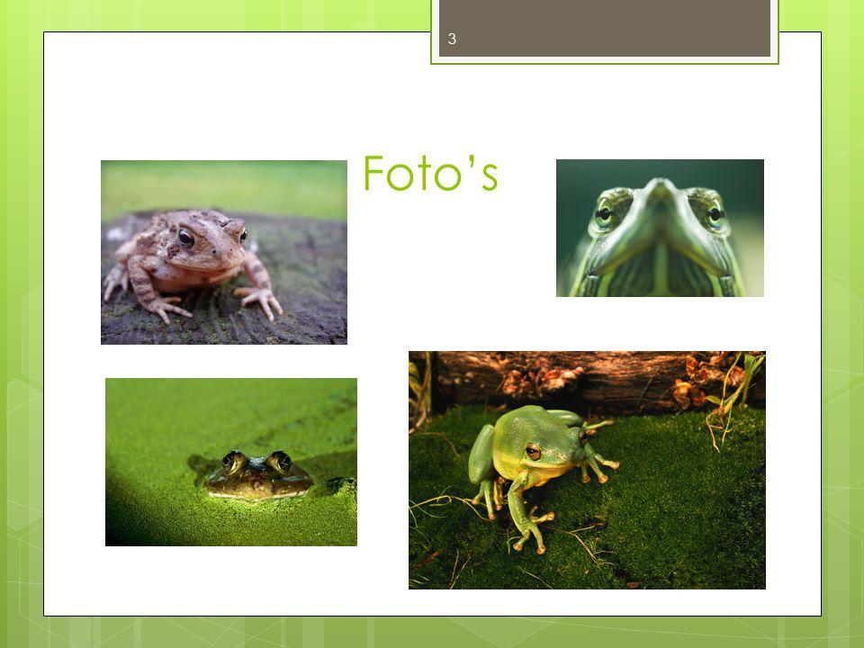 De kikker quiz Hoeveel procent van de 7020 amfibieen zijn kikkers.