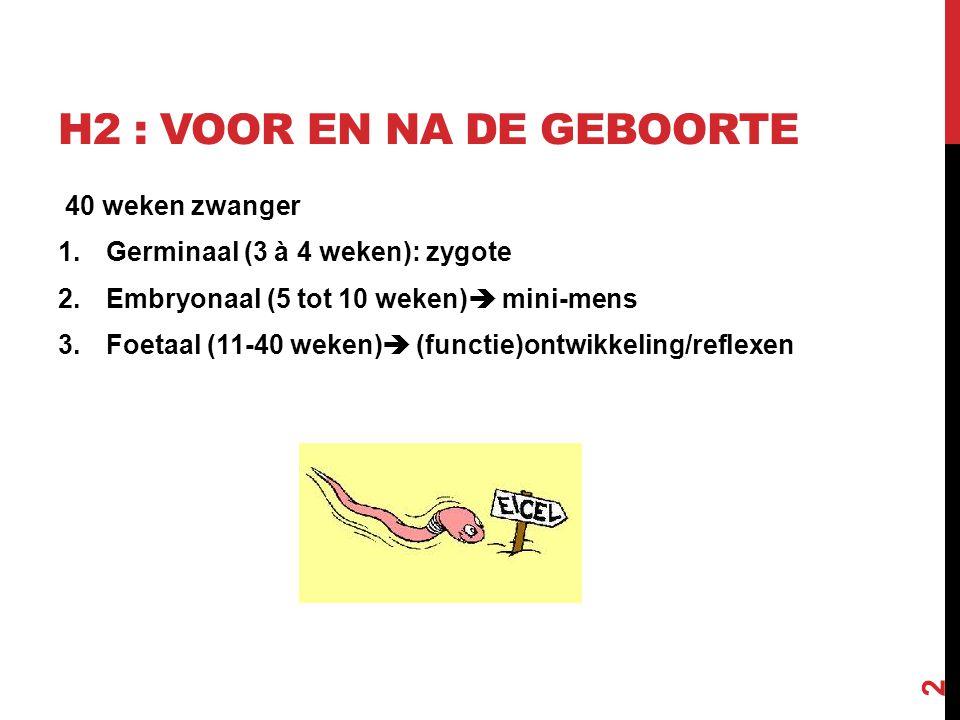 H2 : VOOR EN NA DE GEBOORTE 40 weken zwanger 1.Germinaal (3 à 4 weken): zygote 2.Embryonaal (5 tot 10 weken)  mini-mens 3.Foetaal (11-40 weken)  (fu