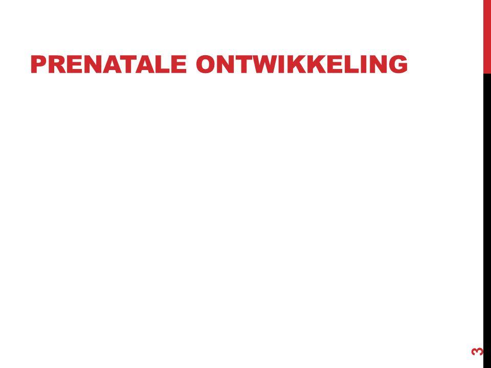 PRENATALE ONTWIKKELING 3