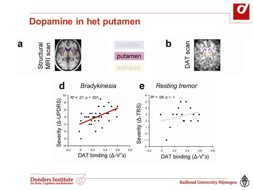 Dopamine in het putamen