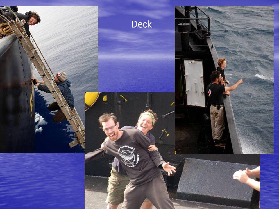 Deck (zodiacs)