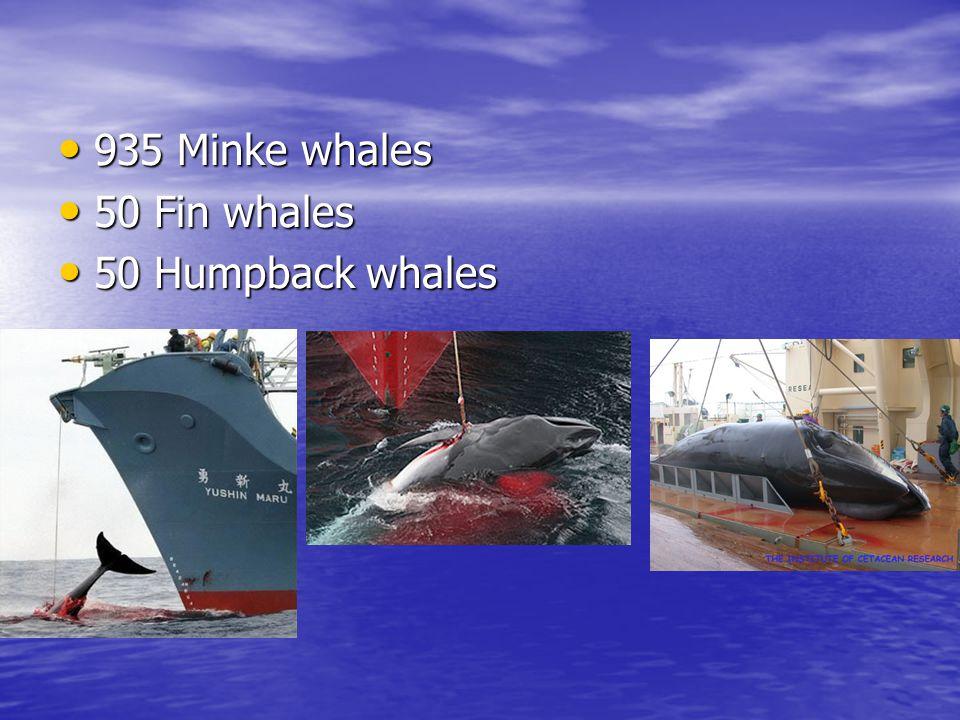 935 Minke whales 935 Minke whales 50 Fin whales 50 Fin whales 50 Humpback whales 50 Humpback whales