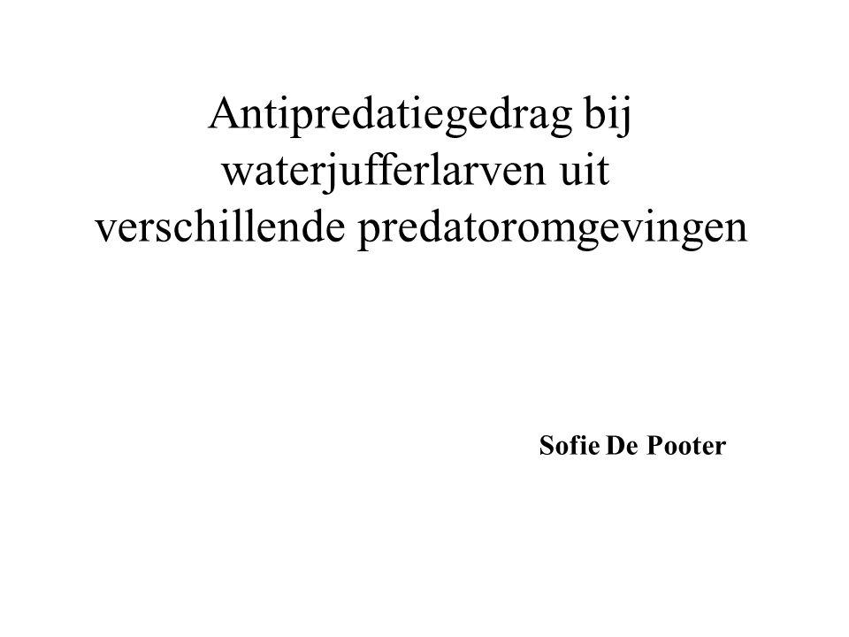 Antipredatiegedrag bij waterjufferlarven uit verschillende predatoromgevingen Sofie De Pooter