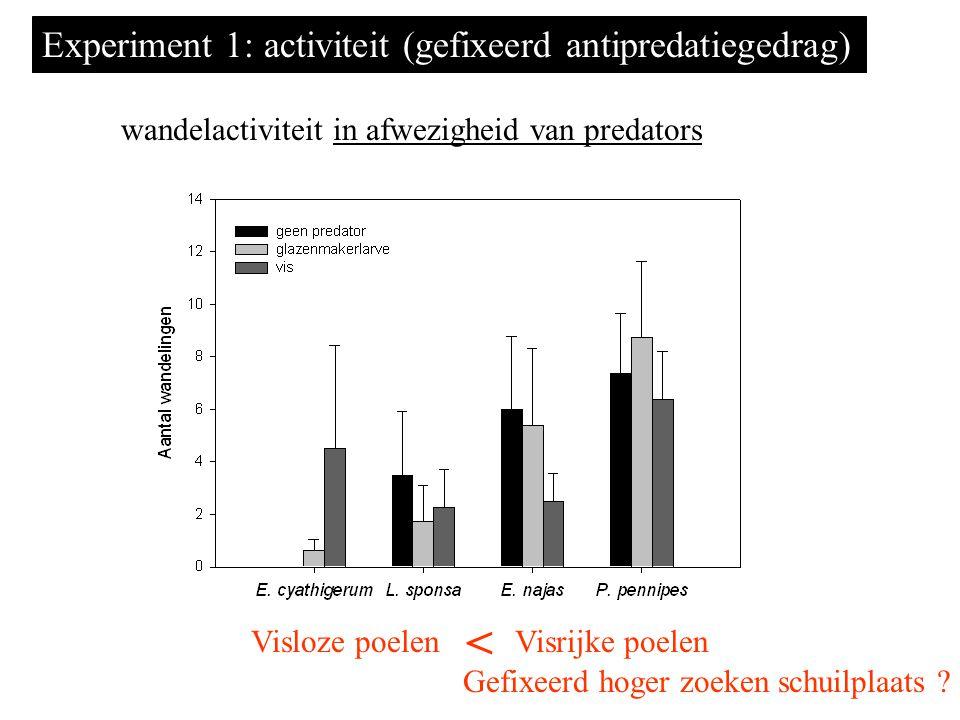 Experiment 1: activiteit (gefixeerd antipredatiegedrag) wandelactiviteit in afwezigheid van predators Visloze poelenVisrijke poelen < Gefixeerd hoger zoeken schuilplaats ?